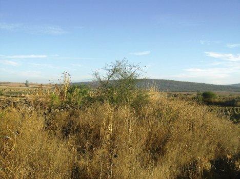 Paraje en el Arroyo de la Pila y al fondo la loma