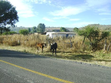 Salida a Penjamillo, por el rumbo del Llano