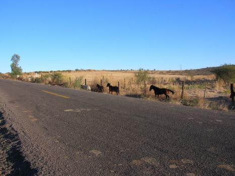 Amanecer, caballos en El Puertecito