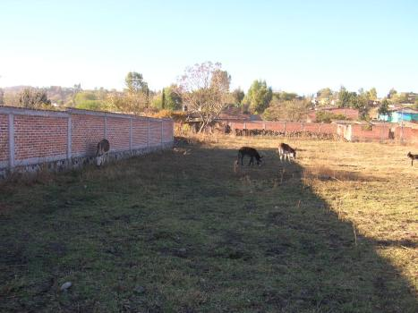 Barrio La Viscosa. Otra de los burros pastando