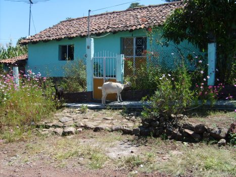 Bella casa tradicional, con todo y chiva y  huerto