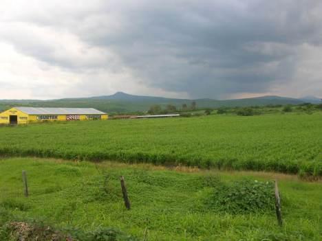 Plantíos en Penjamillo y al fondo Cerro del Metate, en día medio nublado