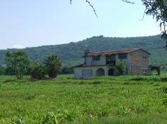 Buena Vista 1
