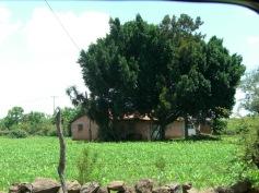 El Cúcuno 5