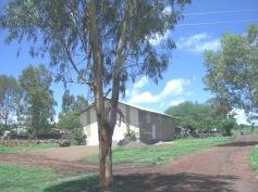 San Isidro 8