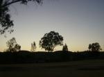 Ziquítaro, calles y paisajes, 10. Mañanita del día 12, árboles y Sol se saludan