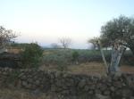 Ziquítaro, calles y paisajes, 14 bis. Mañanita del día 12, cerca, agave y a lo lejos rumbo de el Palodulzal