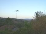 Ziquítaro, calles y paisajes, 21. Mañanita del día 12, al fondo La Penca