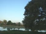 Ziquítaro, calles y paisajes, 41. La Ojo de Agua con su sabino y su presita
