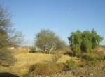Ziquítaro, calles y paisajes, 71. En El Llano, solares