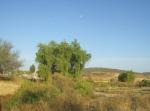 Ziquítaro, calles y paisajes, 72. Mañanita del día 12, en El Llano. Al fondo la loma
