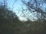 Ziquítaro, calles y paisjes, 47. Mañanita del día 12. Desde el manantial hacia el Poniente