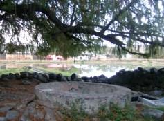 La pileta bajo el sabino, en el manantial La Ojo de Agua o simplmente Lojodiagua